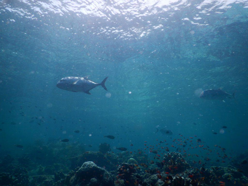 Duiken op Mabul Island