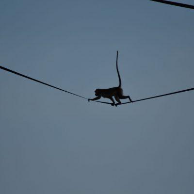 Wildlife spotten bij de Kinabatangan rivier