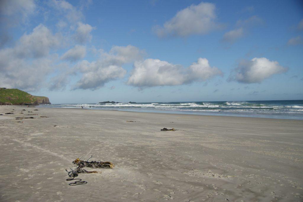 We brachten ook het strand van Dunedin een kort bezoek