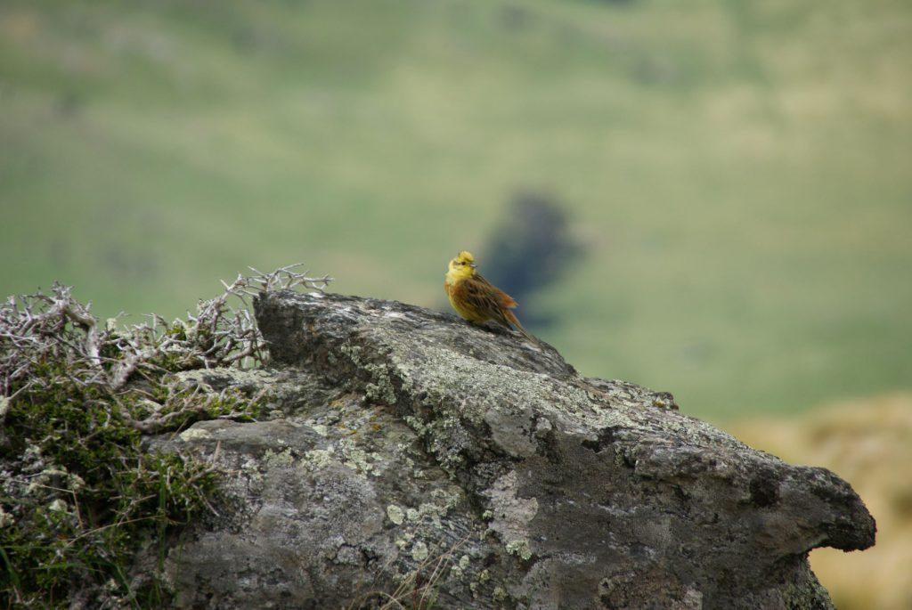 Nog meer vogels :)